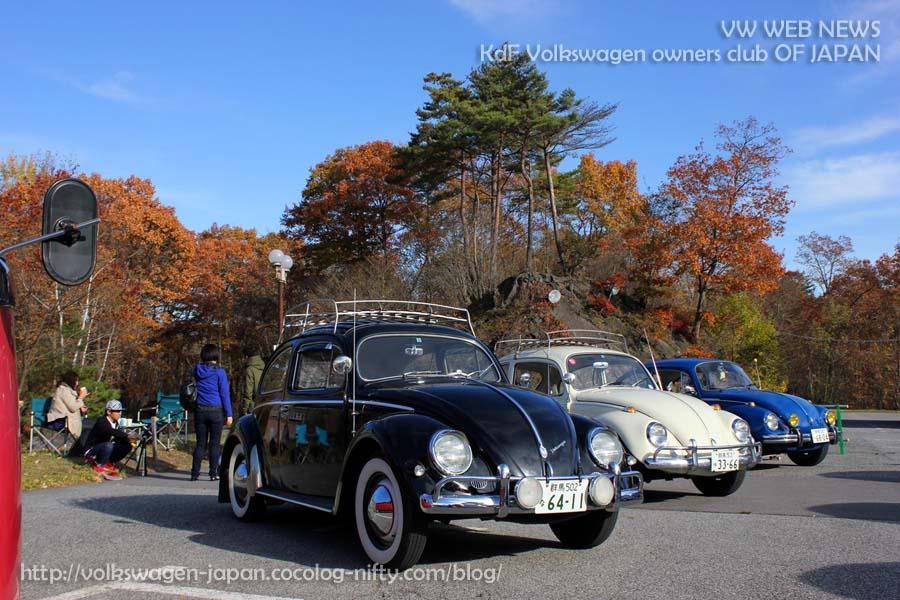 Img_0315_1957_oval_beetle