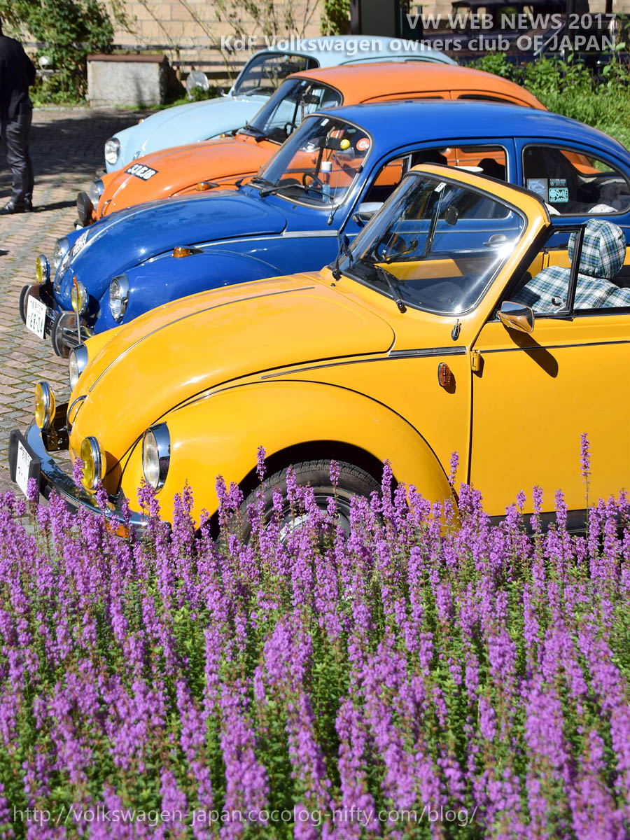 Dsc_0340_beautiful_flower_and_volks